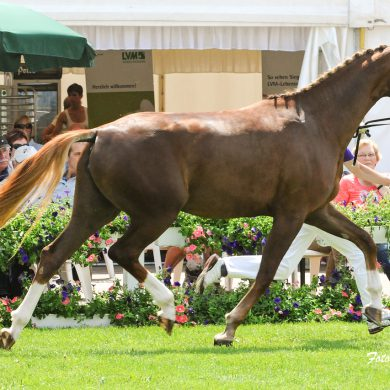 Pferd im Lauf