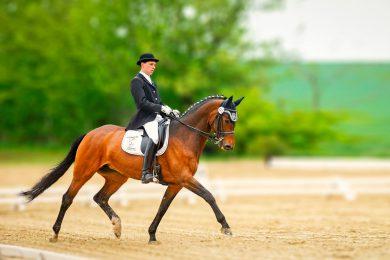 Sebastian mit Pferd