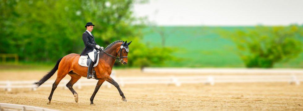 Mit Pferd im Tunier