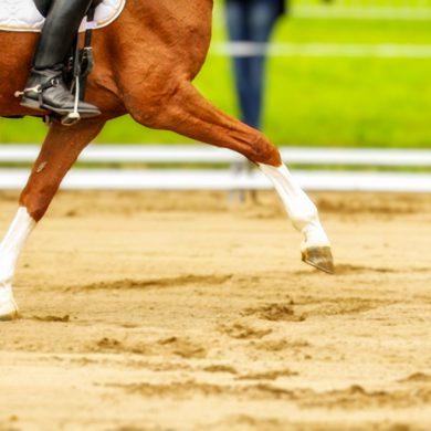 Pferd beim Laufen